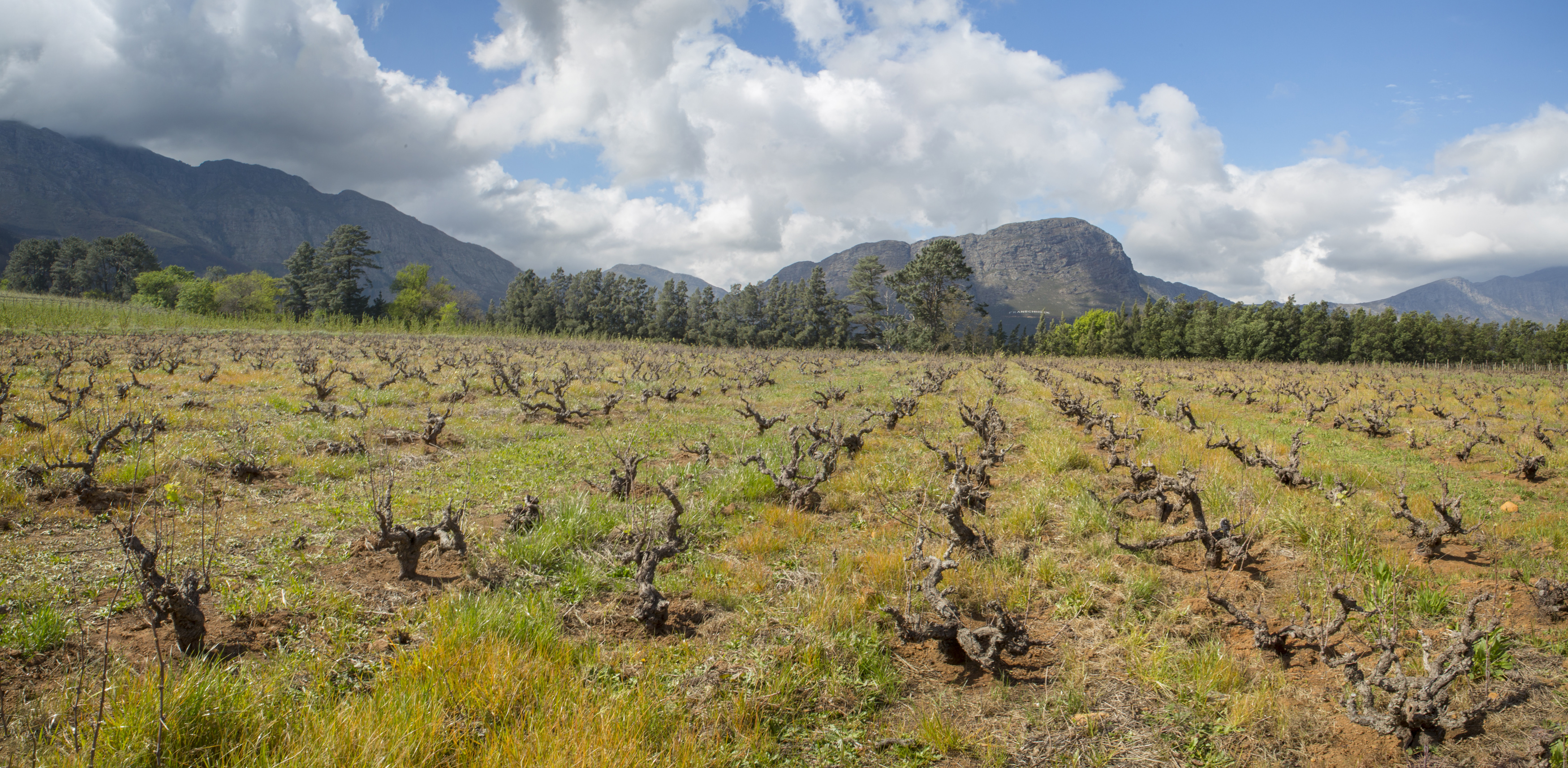 20160908 Vineyard FHoek Pano