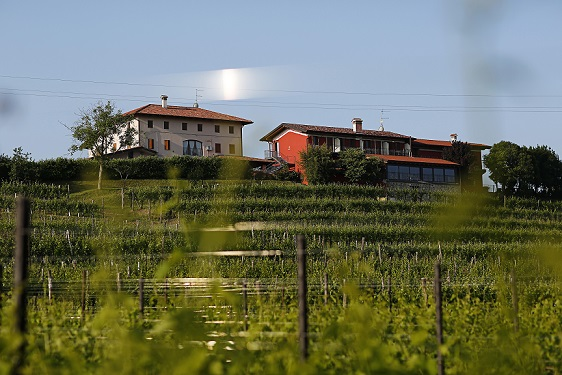 Relais La Collina and surroundng vineyards
