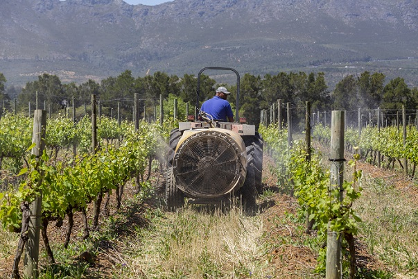 Working in vineyard